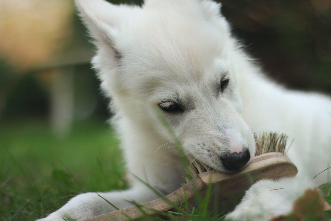 bambino, bianco, cane