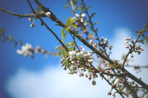 Free stock photo of bloom, blue, branches