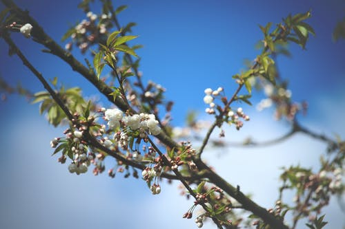 Free stock photo of bloom, blue, branches, flower