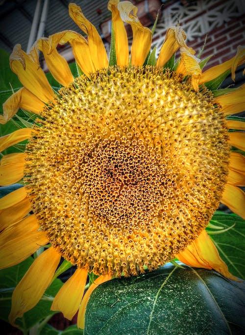 Free stock photo of beautiful flowers, flower closeup, iphone 5s, nature