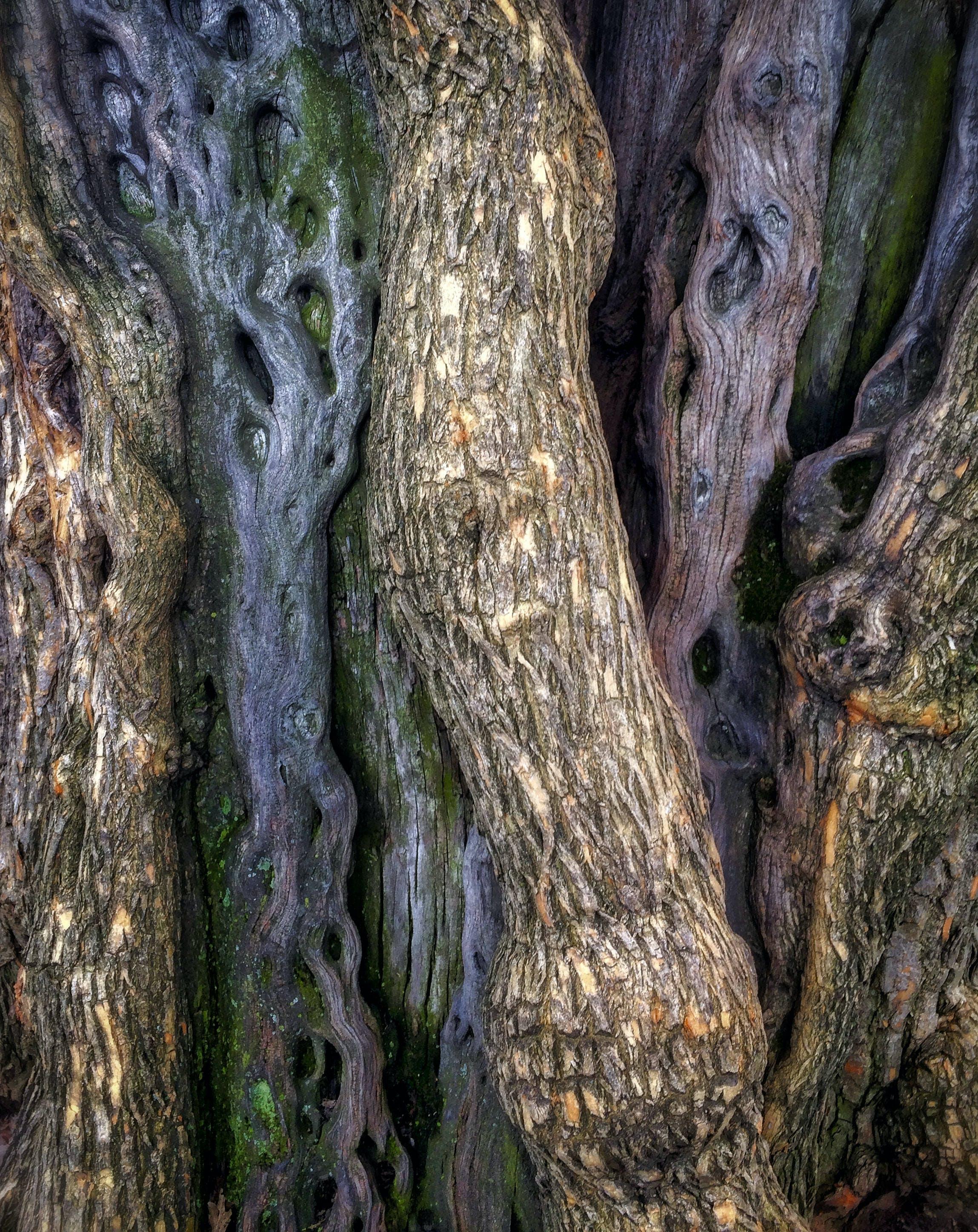 iphone 5s, テクスチャ, 中央公園, 木の幹の無料の写真素材