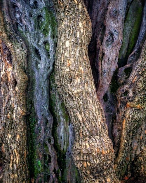 คลังภาพถ่ายฟรี ของ การถ่ายภาพธรรมชาติ, ลำต้นของต้นไม้, เซ็นทรัลปาร์ค, เนื้อผ้า