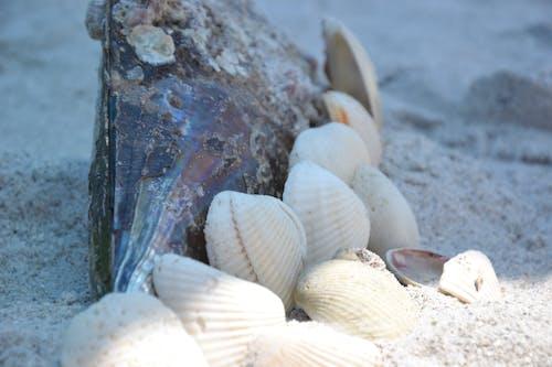 kabuklar, kum, plaj içeren Ücretsiz stok fotoğraf