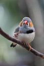 bird, animal, closeup