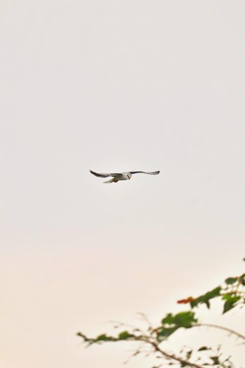 Immagine gratuita di fotografia di uccelli, ornitologia, tiro verticale