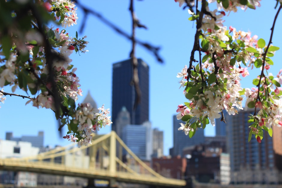 White Flowers on Tree Branch in Front of Building Structures during Day Time