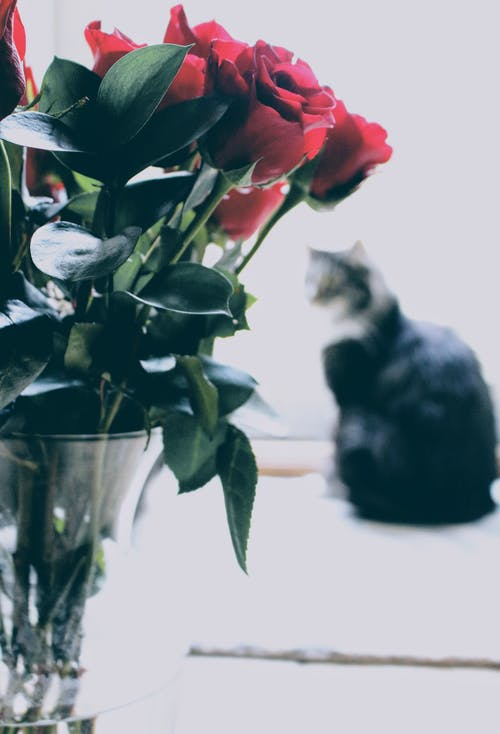 Shallow Focus Photography of Red Roses