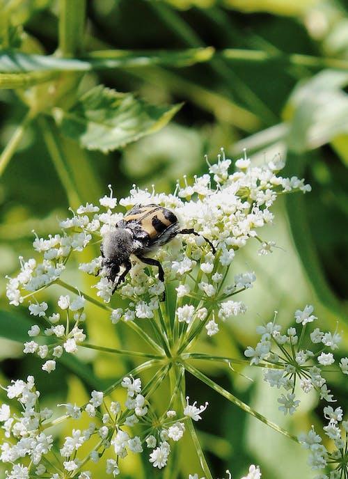 Darmowe zdjęcie z galerii z chrząszcz, delikatny, flora