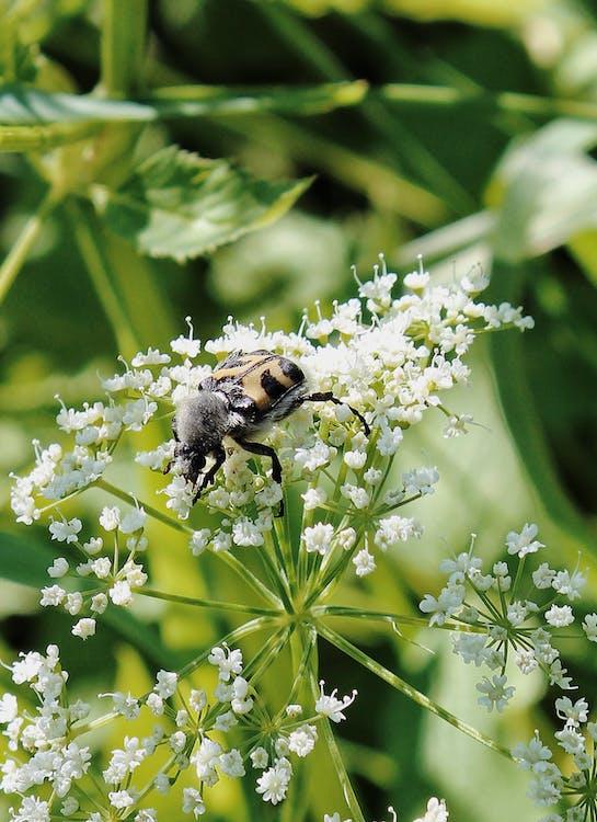 Fotobanka sbezplatnými fotkami na tému chrobák, flóra, hĺbka ostrosti