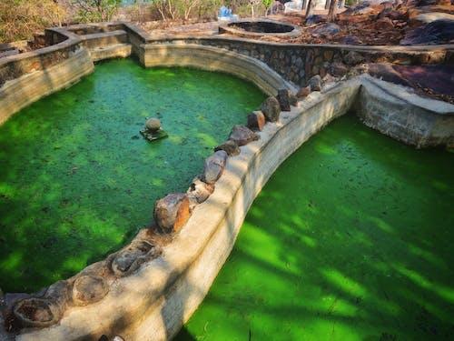 Immagine gratuita di acqua immagazzinata, acqua verde, alghe