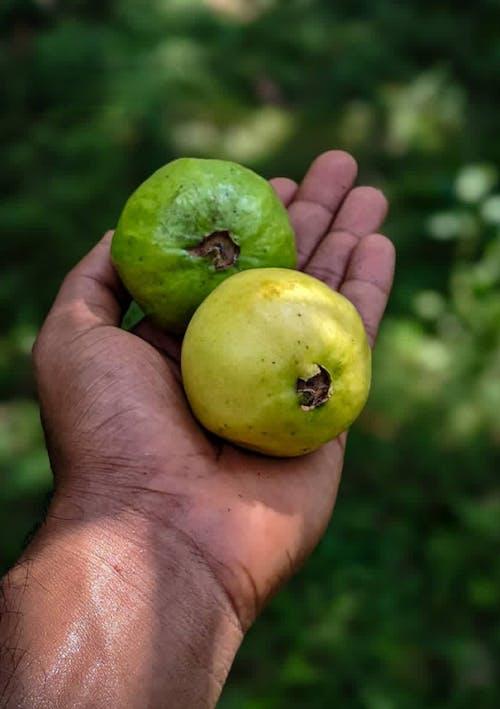 Бесплатное стоковое фото с apple, витамин, выращивать