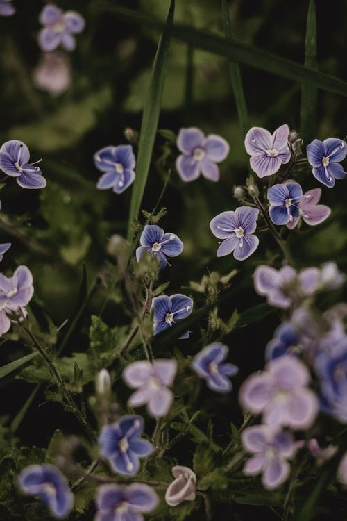 Close-Up Shot of Purple Flowers in Bloom