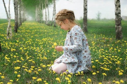Ảnh lưu trữ miễn phí về bím tóc, cánh đồng hoa, chọn
