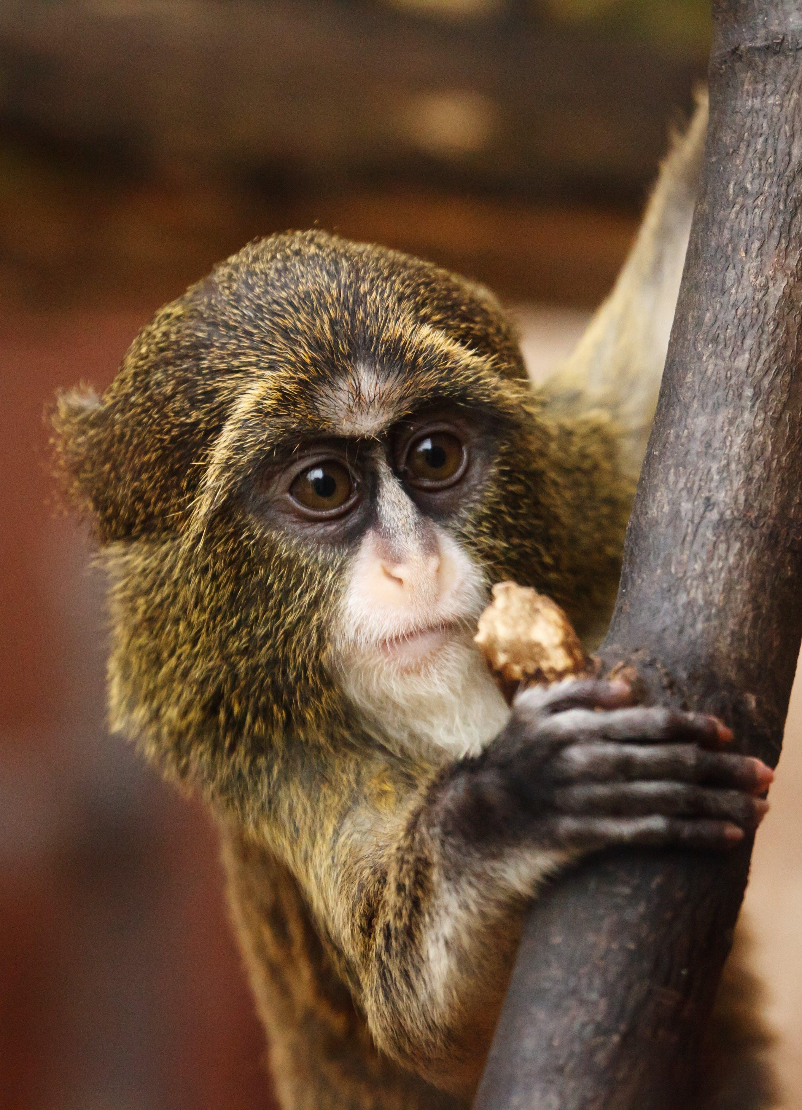 Gratis lagerfoto af close-up, dyr, dyreliv, natur