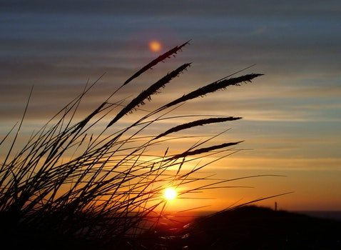 Silhouette Image of Fountain Grass during Sunset in Close Up Photography