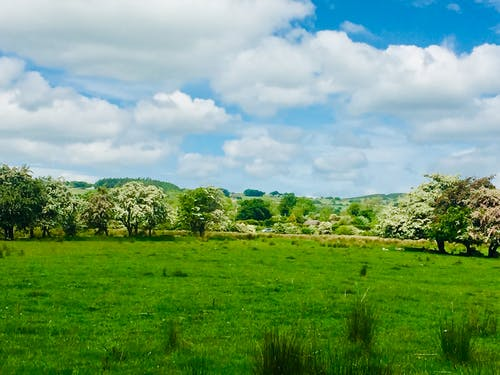 Free stock photo of blooming flowers, cloudy sky, trees