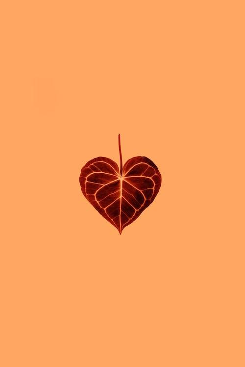 Foto stok gratis abstrak, bentuk, bentuk hati