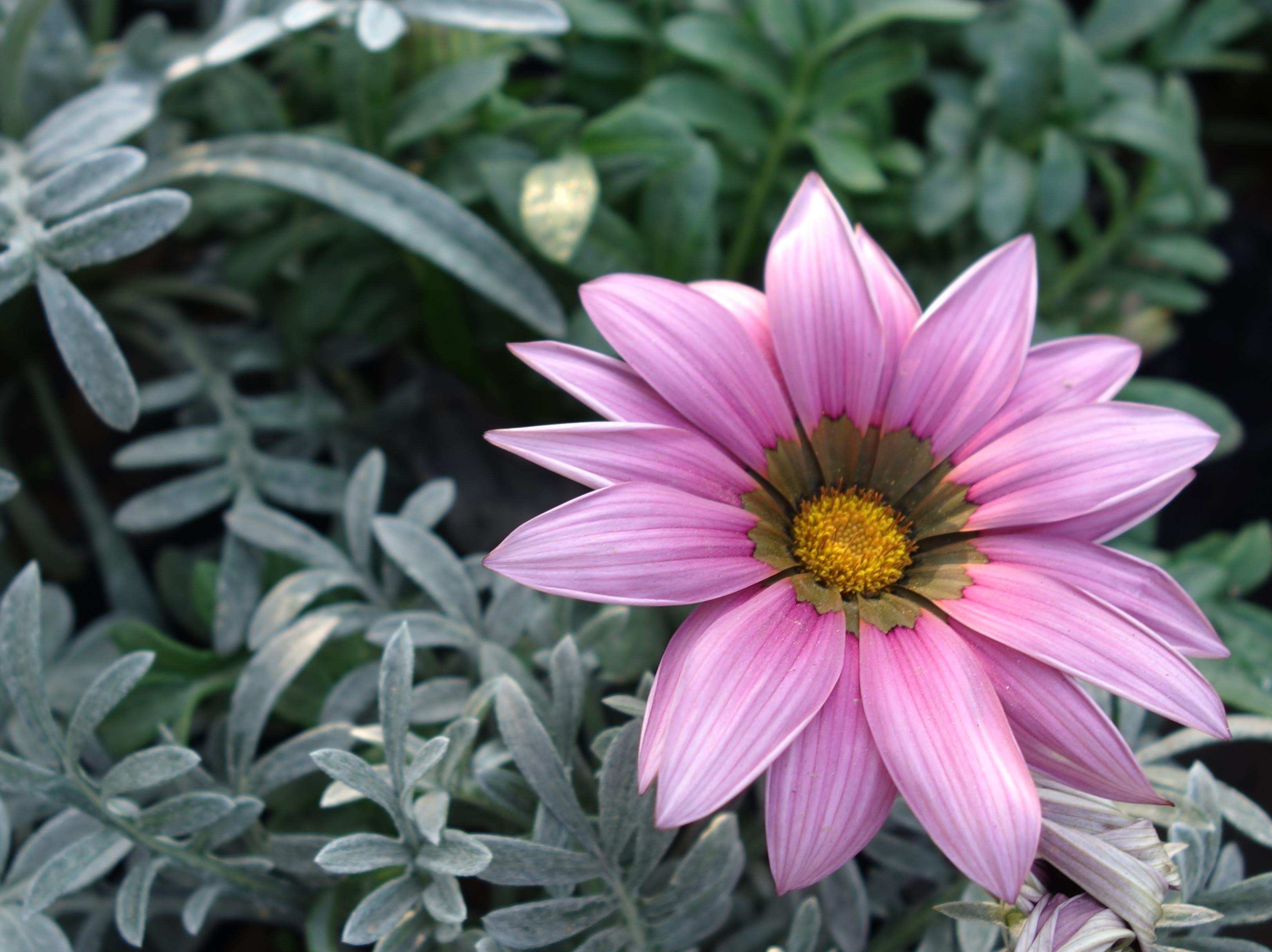 Foto profissional grátis de amarelo, câmera digital, castanho, cor-de-rosa