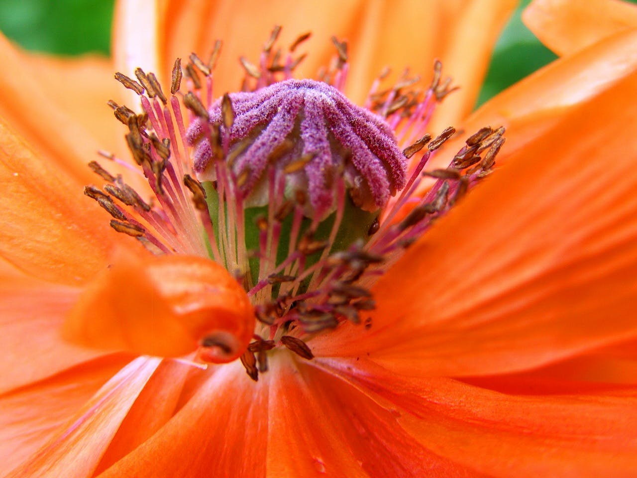 Orange and Pink Petaled Flower