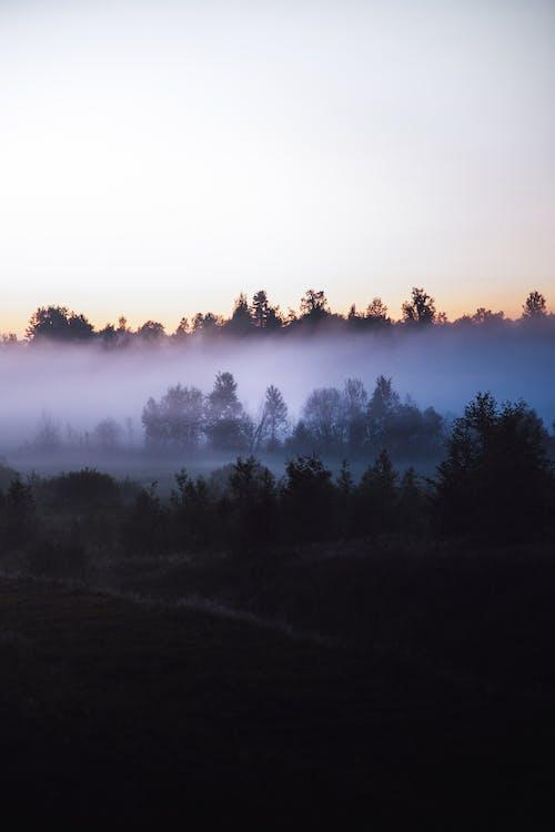 คลังภาพถ่ายฟรี ของ ซิลูเอตต์, ต้นไม้, ธรรมชาติ