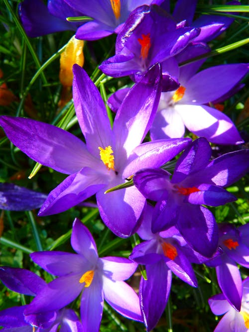 Purple Yellow Petaled Flowers