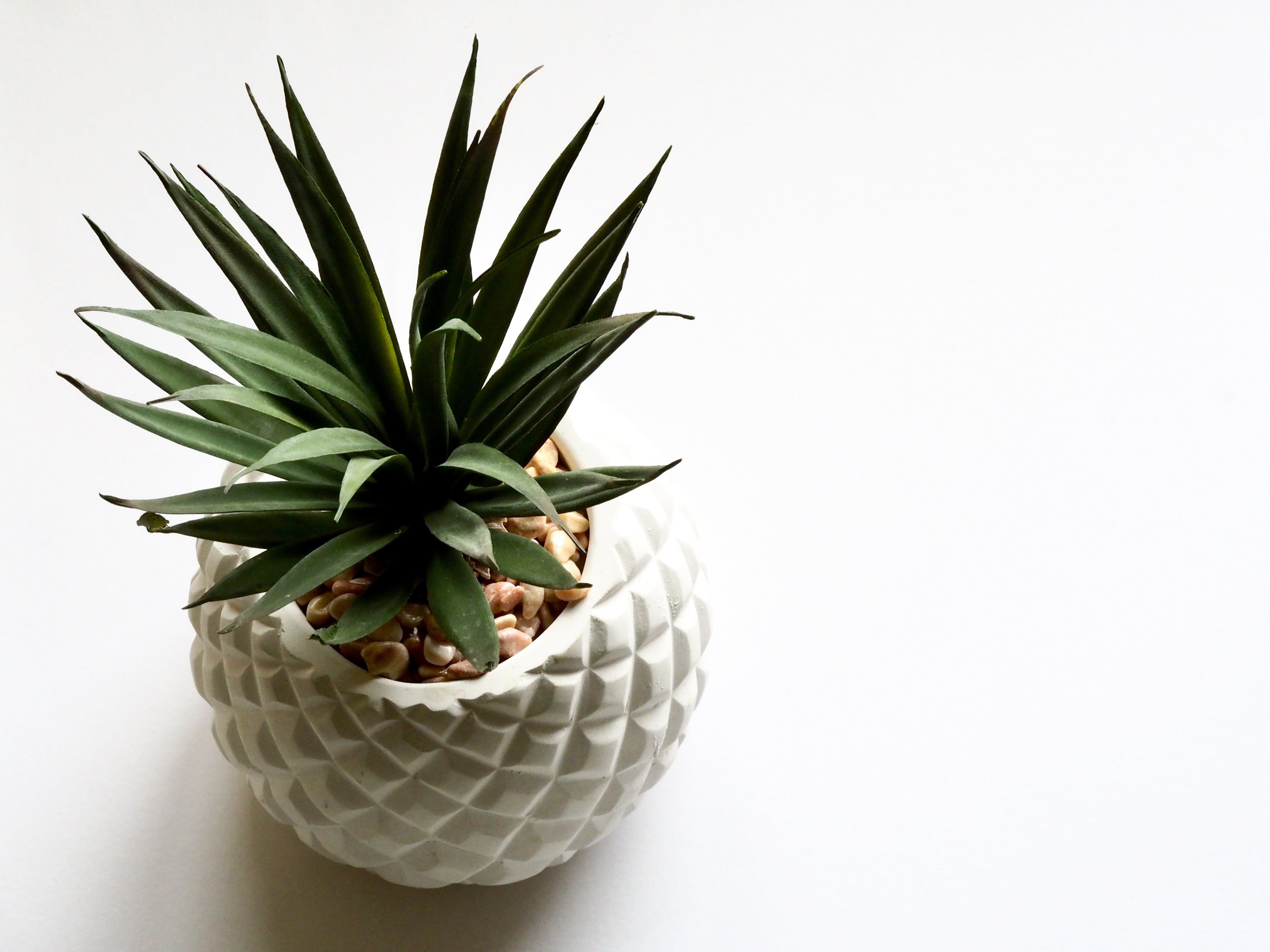 Green Plant on White Vase