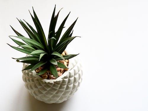 Green Plant on White Vase