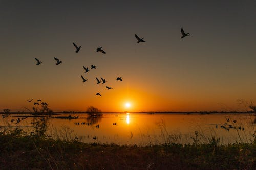 Birds Flying on the Air during Golden Hour
