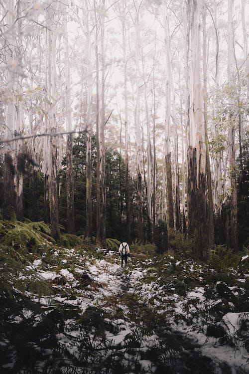@戶外, 下雪的, 人 的 免費圖庫相片
