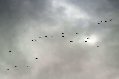 Darmowe zdjęcie z galerii z birds_flying, burza, chmury