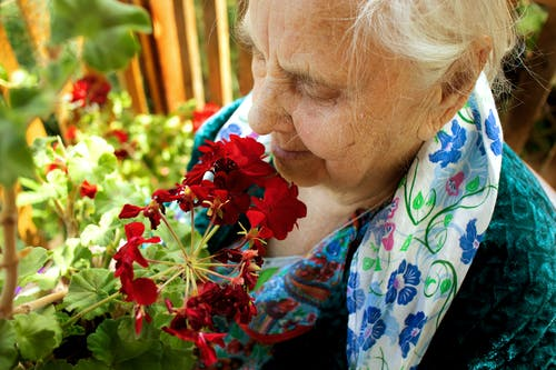 High-Angle Shot of an Elderly Woman Smelling Red Flowers