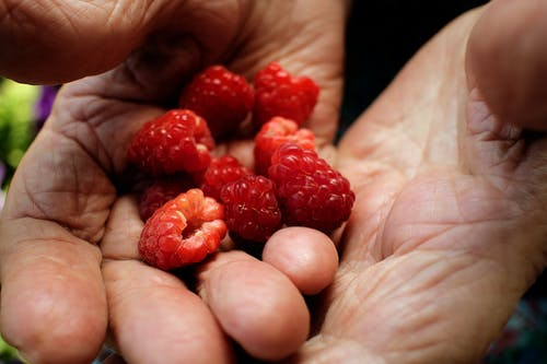 Close-Up Photo of a Person's Hands Holding Red Raspberries