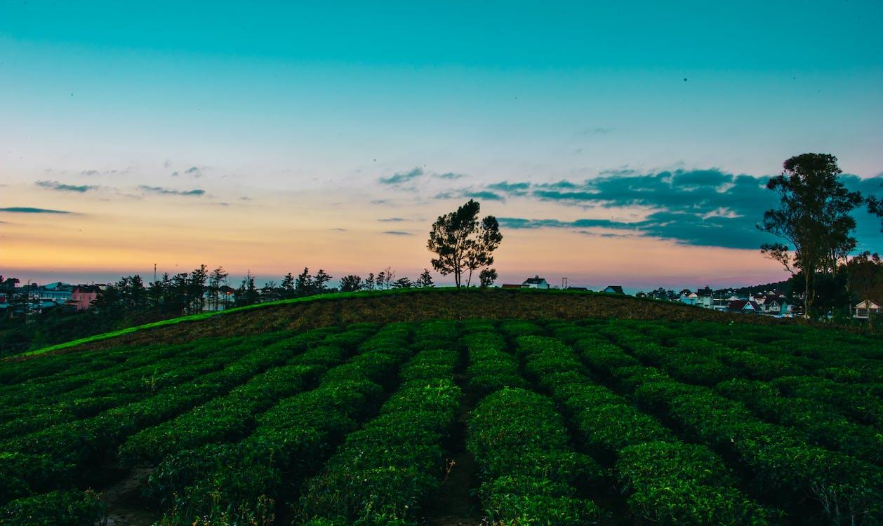 αγρόκτημα, ανάπτυξη, αυγή