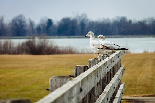 2 Birds in Brown Wooden Fence Near Lake during Day Time
