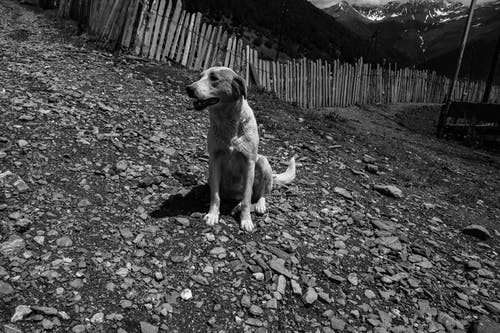 Grayscale Photo of Dog Sitting on Ground