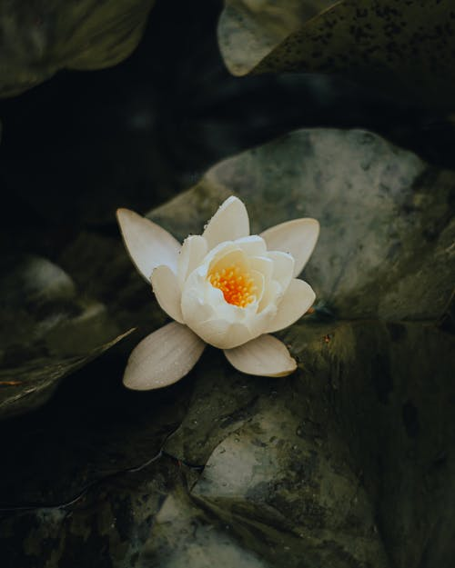 White and Yellow Flower on Gray Rock