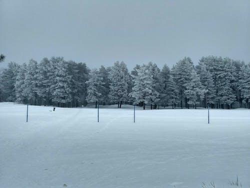 冬季 的 免费素材照片