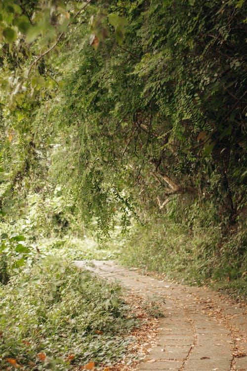 Photos gratuites de arbres, bois, chemin