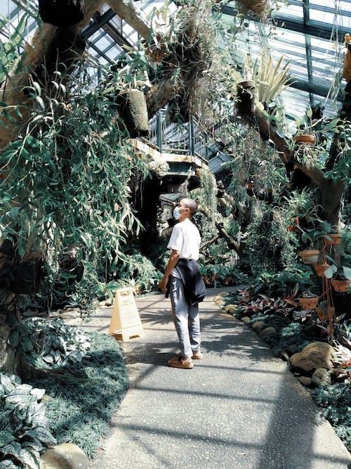 Free stock photo of asian people, botanical garden, garden park