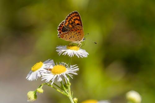Darmowe zdjęcie z galerii z dzika przyroda, dziki, flora