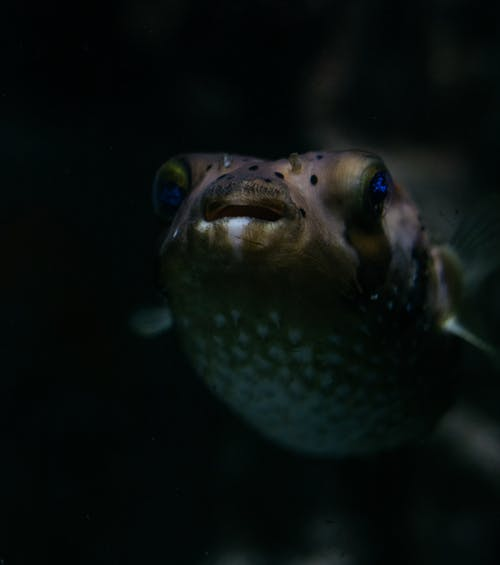 Kostnadsfri bild av akvarium, djur, djurpark