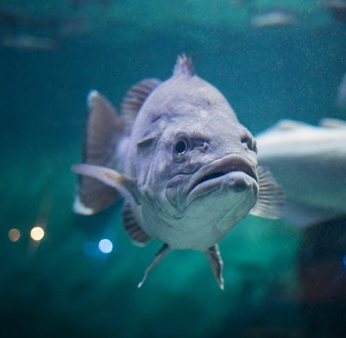 Kostnadsfri bild av akvarium, djup, djur