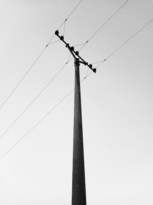 Grayscale Photo of a Utility Pole