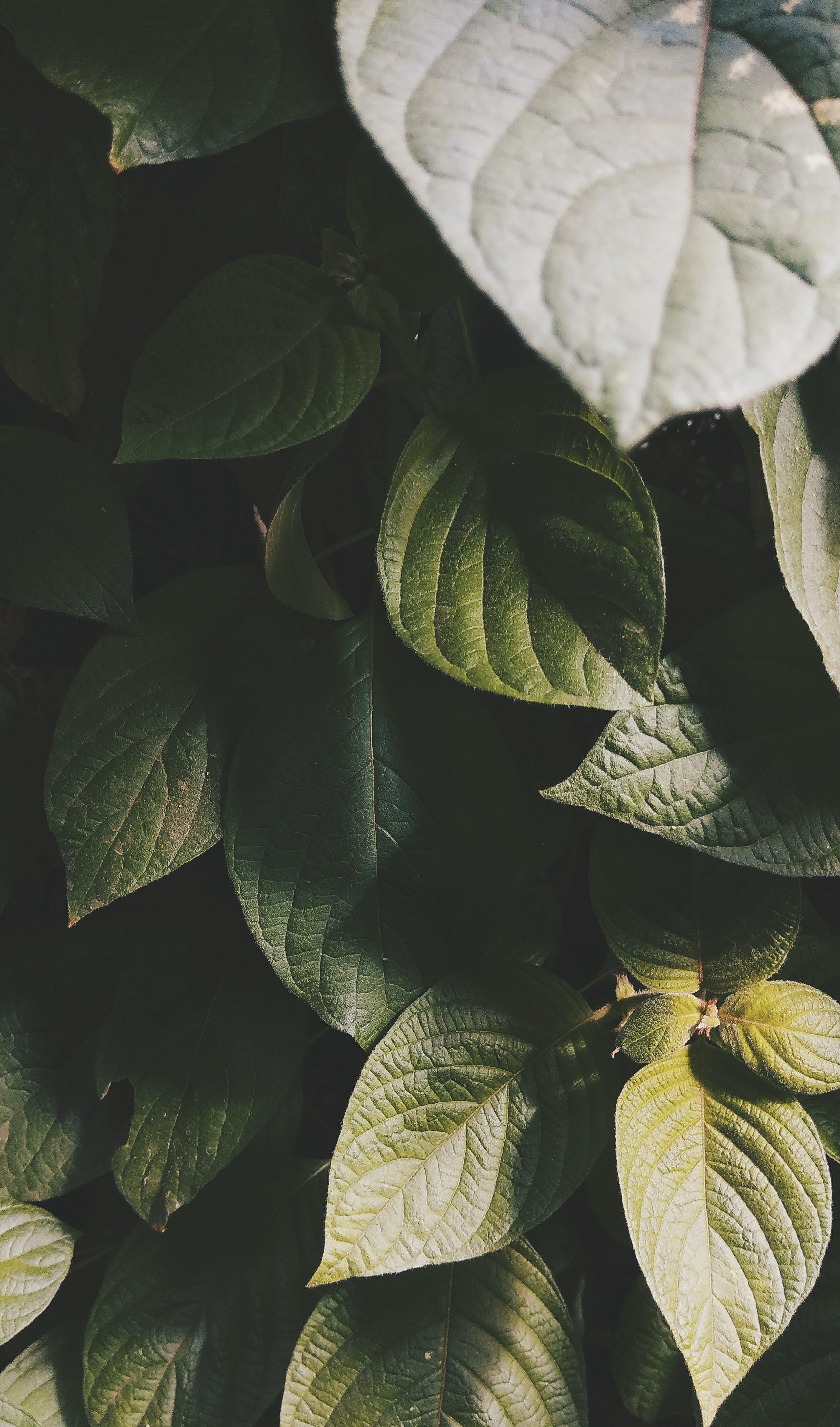 Kostenloses Stock Foto zu grün, mobilechallenge, natur, pflanze