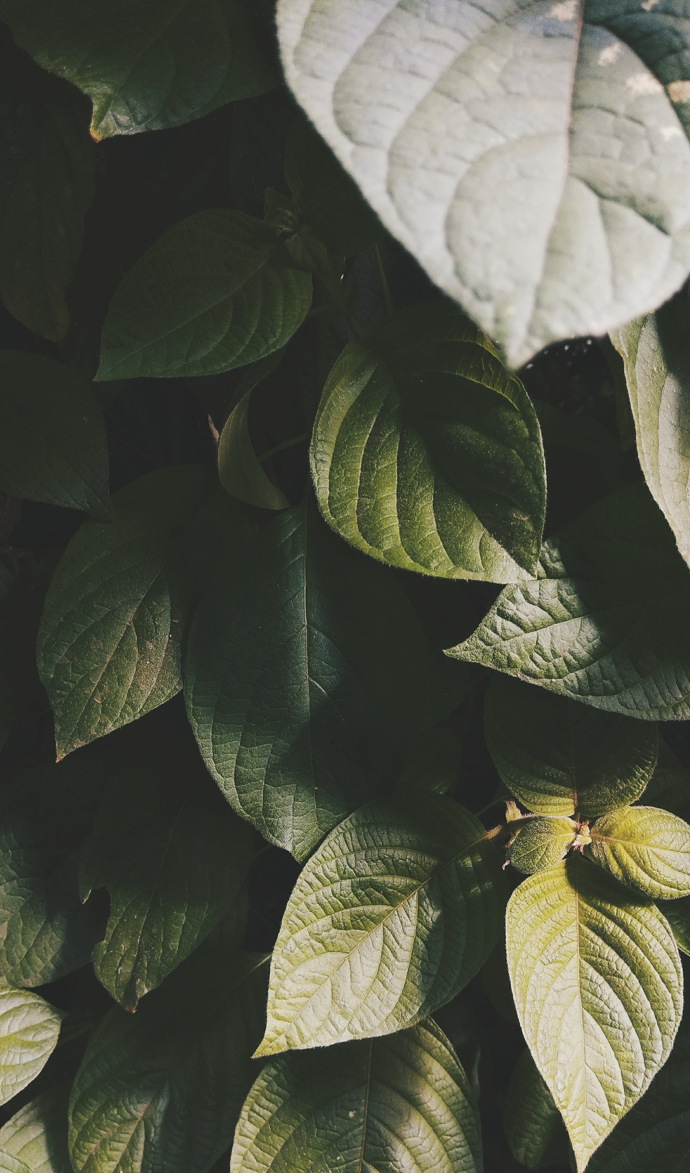 Shallow Focus Photography of Green Leaves