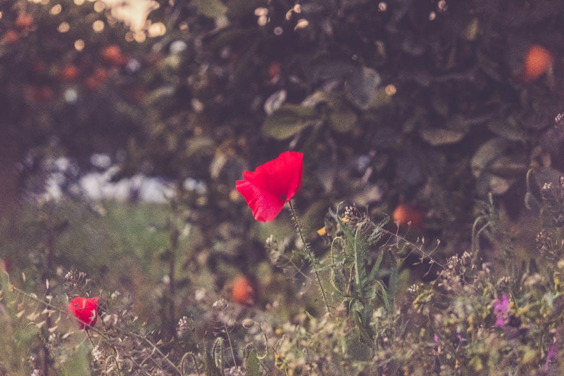 Photographie De Mise Au Point Sélective De Fleur Pétale Rouge