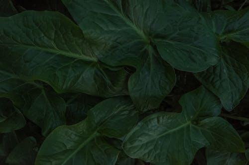 Ingyenes stockfotó háttérkép, levelek, nate háttér, sötétzöld témában