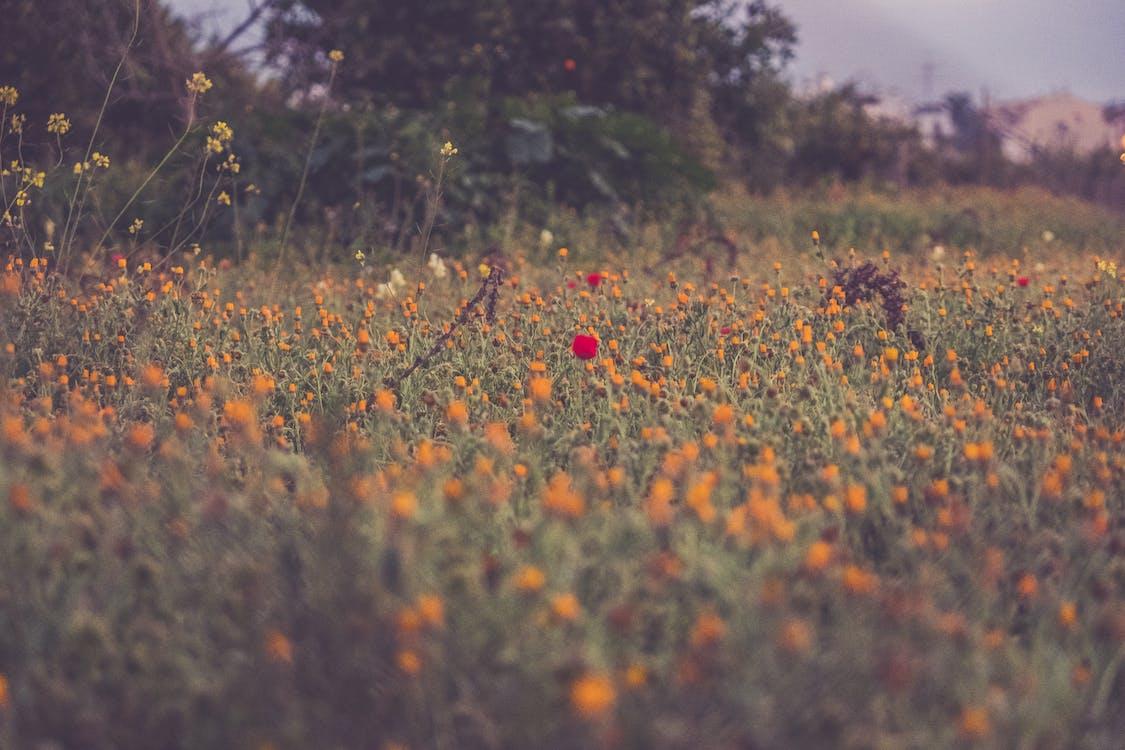 Photographie De Fleurs Pétales Orange Et Rouge