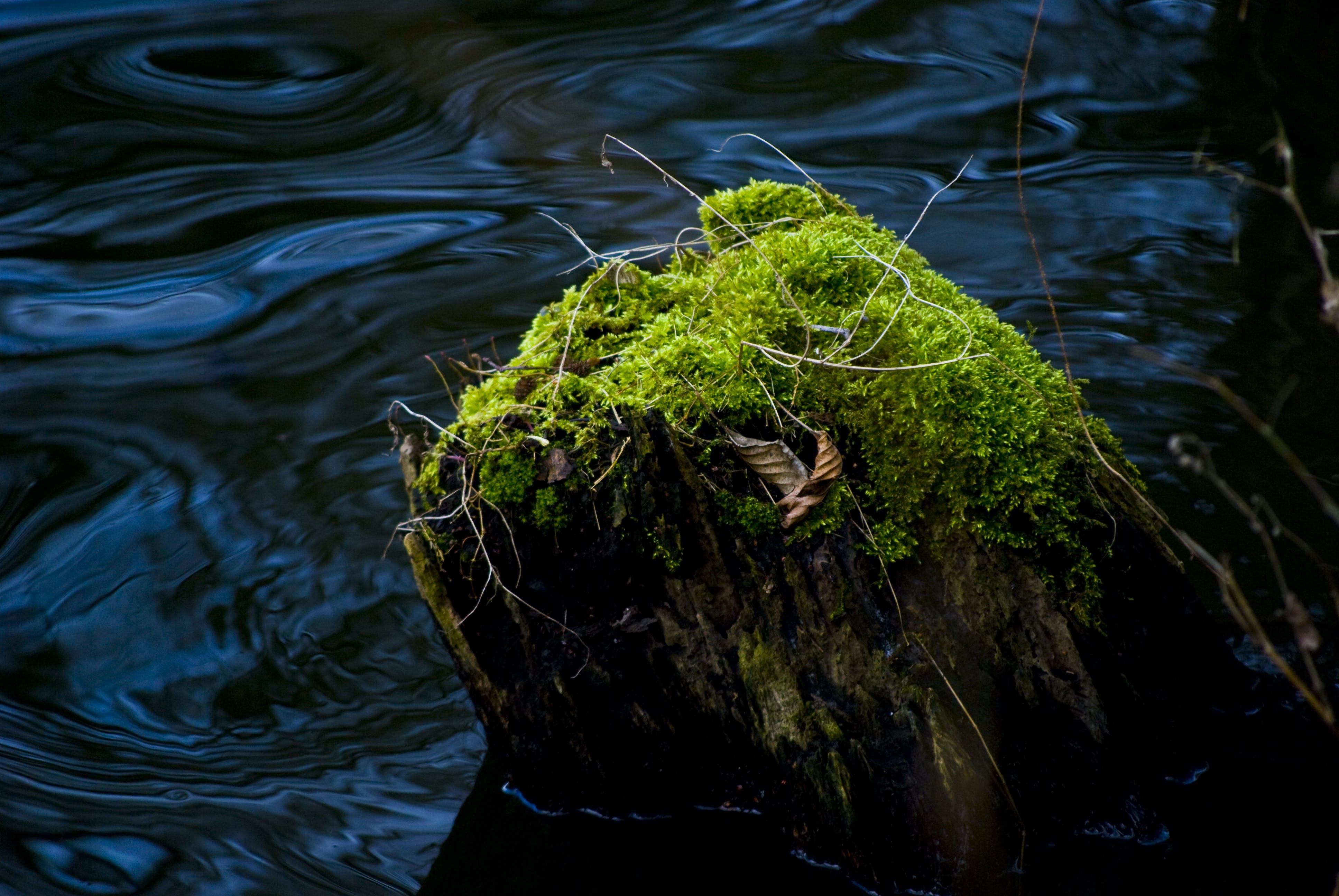 Free stock photo of wood, lake, tree, reserve