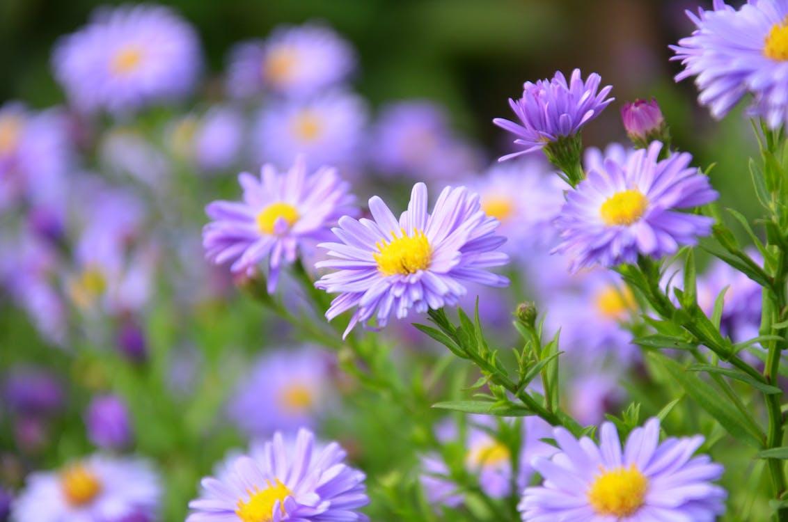 Bahçe, bitki örtüsü, büyüme